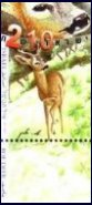 Stamp:Roe Deer (Wild Animals in Israel), designer:Amir Balaban 03/2001