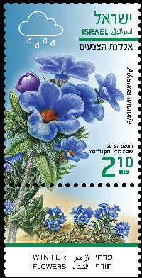 Stamp:Dyer`s Alkanet (Winter Flowers), designer:Tuvia Kurtz, Ronen Goldberg 02/2015