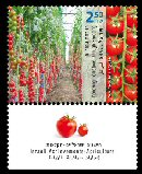 Stamp:Improving Tomatoes through Breeding (Israeli Achievements Agriculture), designer:Meir Eshel 06/2011