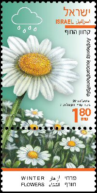 Stamp:Coast False-Chamomile (Winter Flowers), designer:Tuvia Kurtz, Ronen Goldberg 02/2015