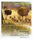 Stamp:The Ostrich (Animals in the Bible), designer:T. Kurtz 02/2005