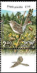 Stamp:Graceful Prinia (Birds of Israel), designer:Tuvia Kurtz, Ronen Goldberg 01/2010