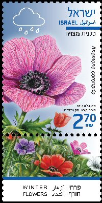 Stamp:Crown Anemone (Winter Flowers), designer:Tuvia Kurtz, Ronen Goldberg 02/2015
