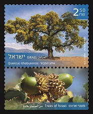 Trees of Israel Quercus ithaburensis Stamps