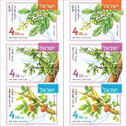Aromatic Plants Booklet