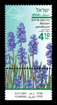 Autumn Flowers - Muscari parviflorum Stamp Sheet