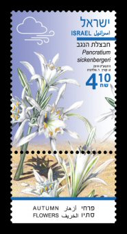 Autumn Flowers - Pancratium sickenbergeri Stamp Sheet