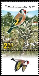 Stamp:Goldfinch (Birds of Israel), designer:Tuvia Kurtz, Ronen Goldberg 01/2010